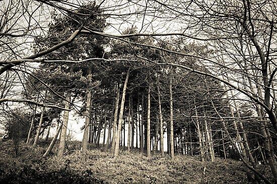 Looming - Perry Woods  by Rhys Herbert