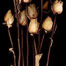 Nine Roses by MarkBigelow
