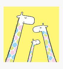 Giraffe family Photographic Print