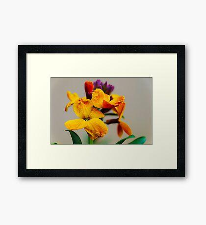 Wallflower Framed Print