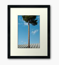 Growing Above You Framed Print