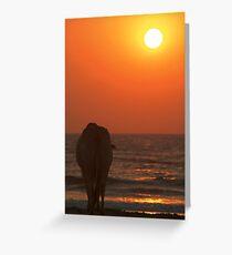 Cow Watching the Sunset Arambol Greeting Card