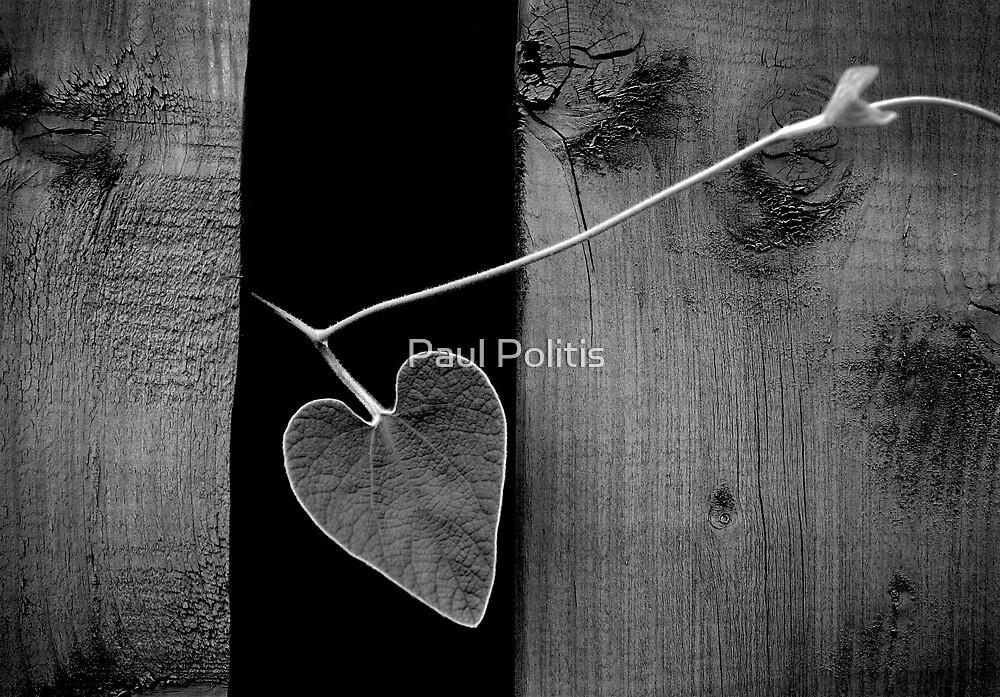 Heart by Paul Politis