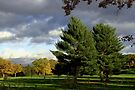 Twin Pines After An Autumn Storm by Gene Walls