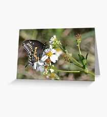butterfly in the swamp Greeting Card