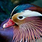 Mandarin Duck by Antoine de Paauw