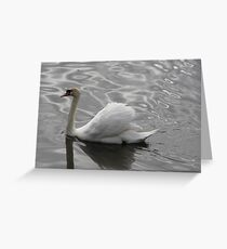 MUTE SWAN Greeting Card