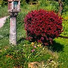 Wayside cross and a bush by Patrick Jobst