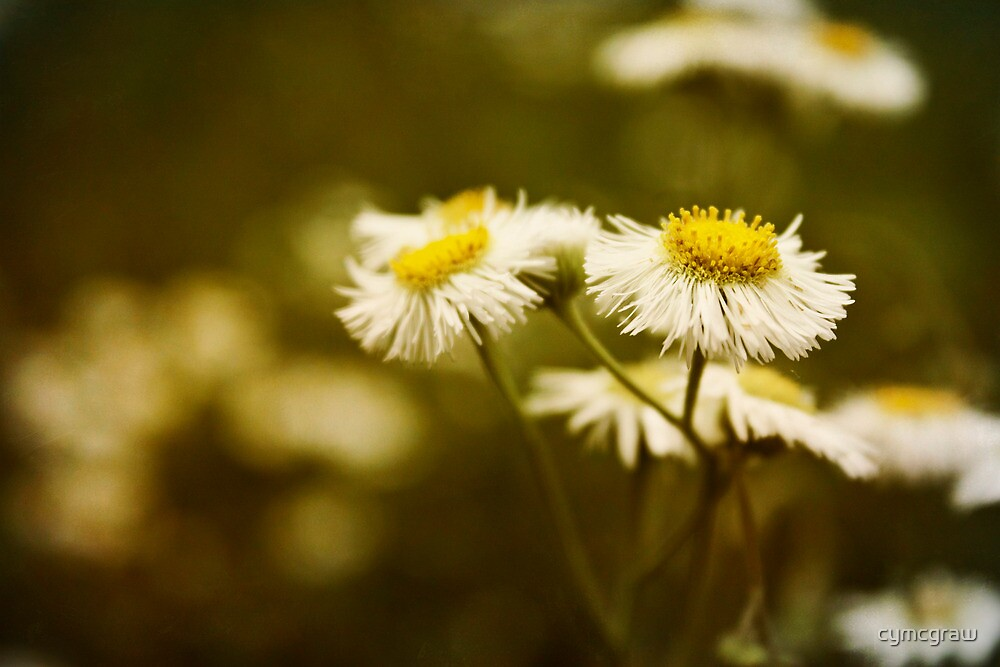 Common Fleabane: Not so Common Looking by cymcgraw