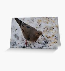 Mourning Dove Eating Greeting Card