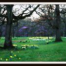 Spring by Jasper Glaspie