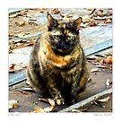 Little LuLu/ Torti cat  by Sandra Russell