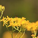 Yellow by Judi Corrigan