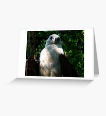 Philippine Eagle Greeting Card