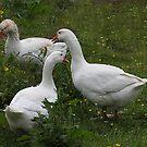 Goosey, Goosey and Gander !! by Irene  Burdell