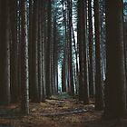 Sugar Pines by Jack Chauvel