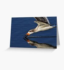 Early Morning Skimmer Greeting Card
