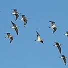 Flock Of Curlews by Robert Abraham