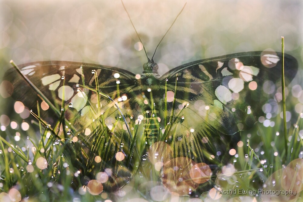 Elusive Butterfly by Astrid Ewing Photography