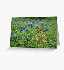 Bluebonnets and Indian Paintbrushes Greeting Card