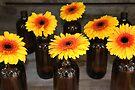 Gerbera Bottles by Emma Holmes