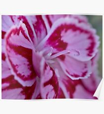 Two tone flower  Poster