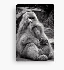 Work, play and stay together. Snow Monkeys Canvas Print