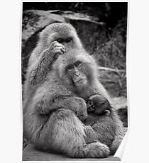 Work, play and stay together. Snow Monkeys Poster