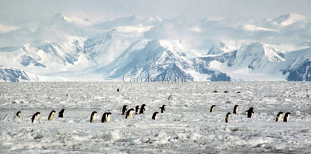 Penguin Highway by Carole-Anne