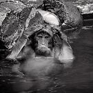 Rinse and Repeat. Snow Monkeys by Norman Repacholi