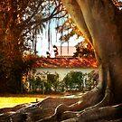 Under The Banyan tree by John Rivera