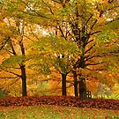 Fall in Chicago by jozi1