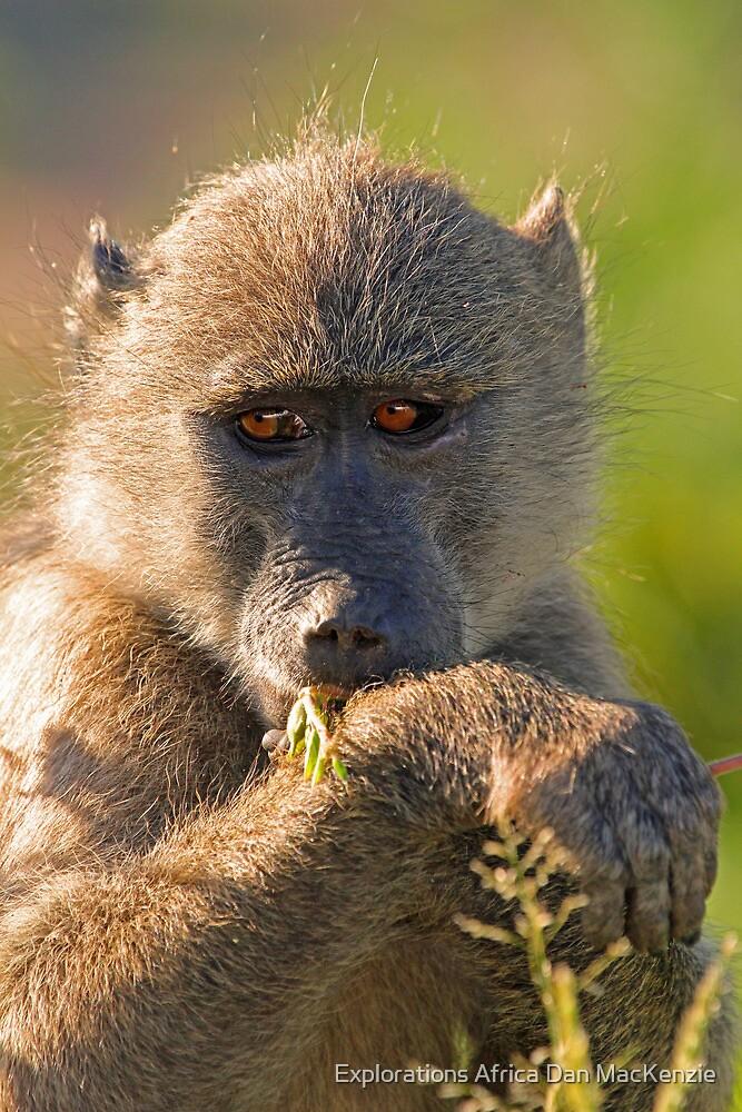 Breakfast greens by Explorations Africa Dan MacKenzie