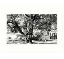 Story Tree @ Abbotsford Convent Art Print