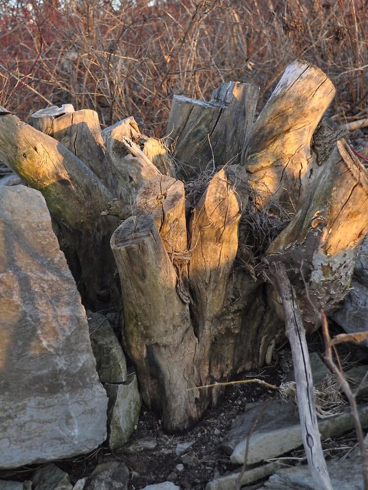 Fill the frame - stump, rock, brush by Majameath