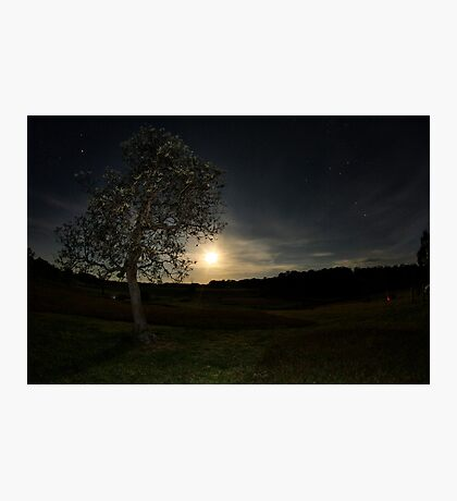 Basking in the Moonlight Photographic Print