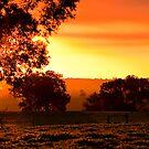 Summer Sunset by Michelle  Wrighton