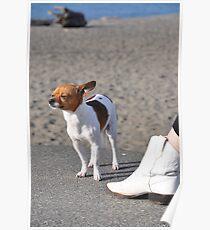 Alki Beach Pup Poster