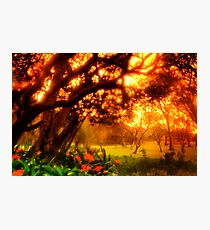 The Secret Garden Photographic Print