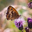 Meadow Brown Butterfly by Vicki Field
