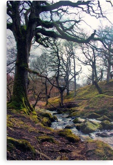 Restless Waters by Vicki Field