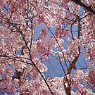 Spring by GMcDermott
