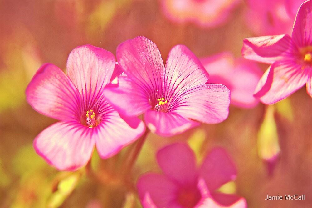 blushing pink by Jamie McCall