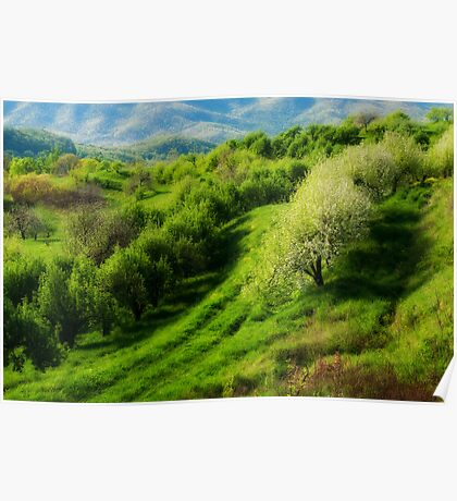 Blue Ridge Mountains Apple Orchard Poster