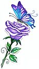 Purple butterfly and Rose by EverIris