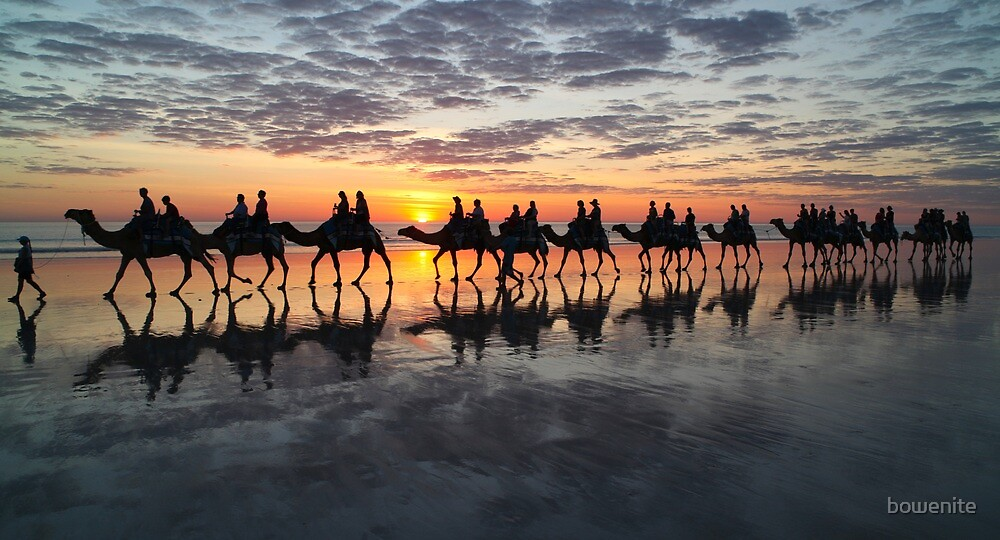 ''Cable Beach Camels'' by bowenite