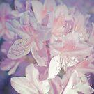 Azaleas by Syd Weedon