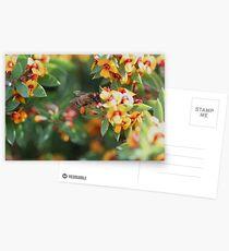 Pollen Legwarmers Postcards