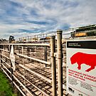 Animal Alert by Judith Cahill