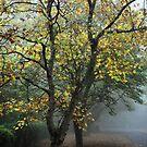 Autumn Mist - Mt Wilson NSW Australia by Bev Woodman